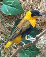 Birds in Green Hill Manor