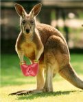 ricky___boxing_kangaroo_by_kombatgod-d3co9g0